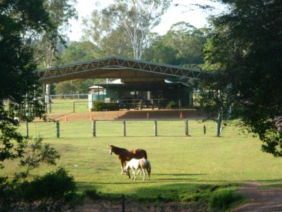 Horses in front of riding arena